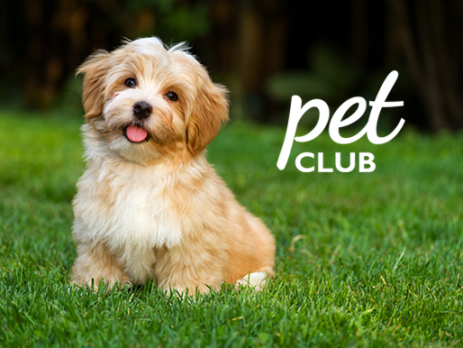 Save on your pet supplies with the Family Fare yes Rewards Pet Club.